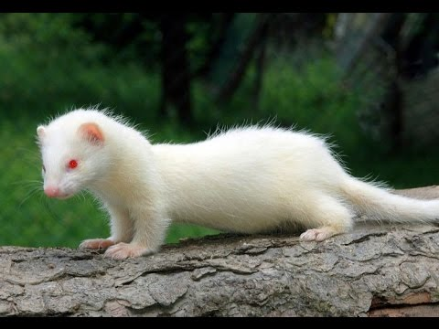 A picture containing animal, mammal, outdoor, sitting  Description automatically generated