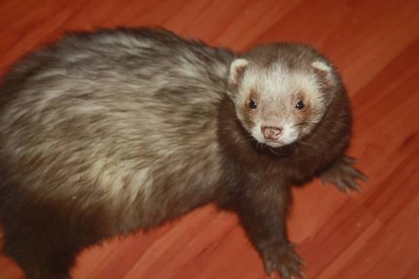A small brown animal  Description automatically generated
