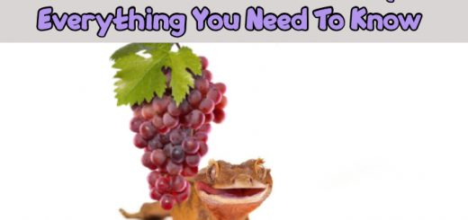 Can Crested Geckos Eat Grapes