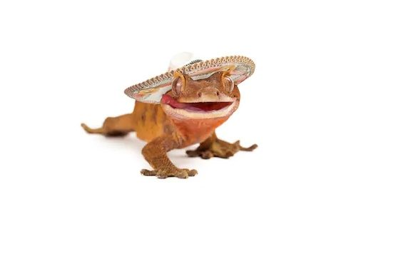 Can Crested Geckos Eat Waxworms