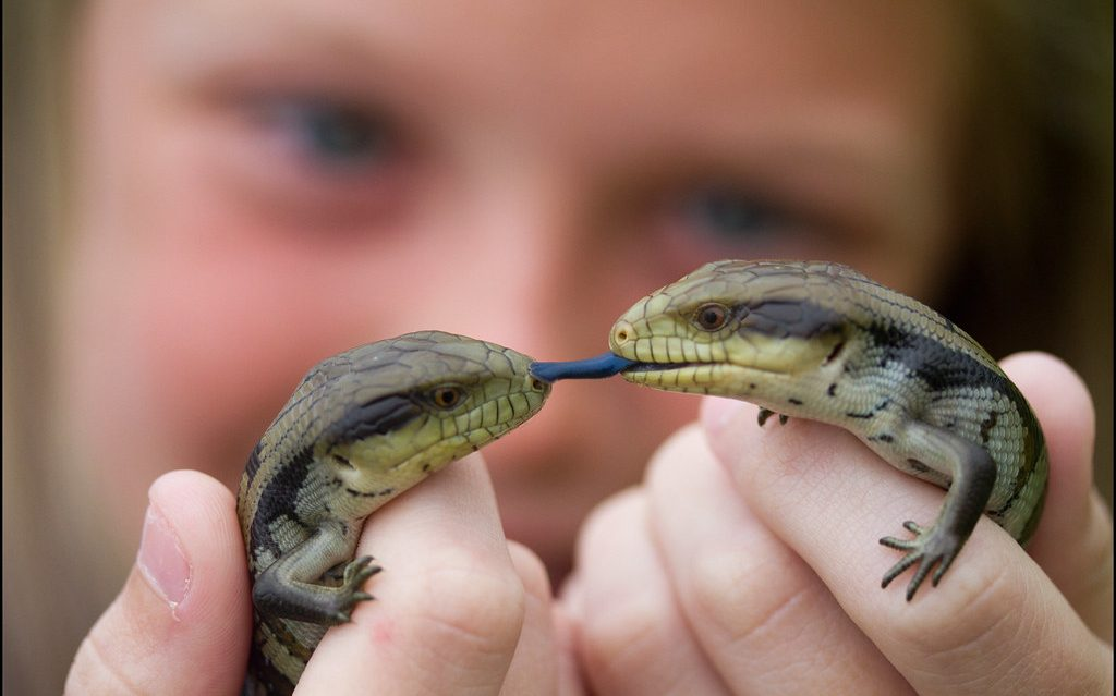 What do baby skinks eat